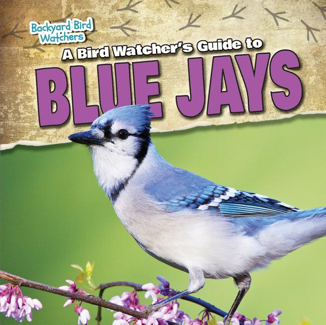 A Bird Watcher's Guide to Blue Jays
