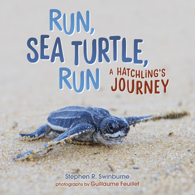 Run, Sea Turtle, Run: A Hatchling's Journey