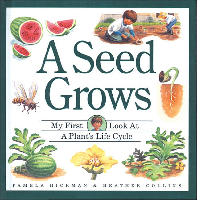 A Seed Grows
