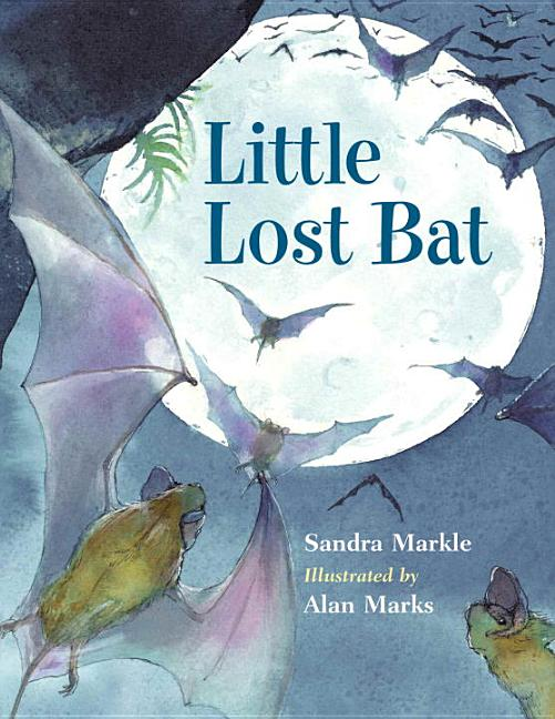 Little Lost Bat