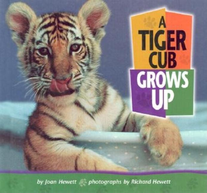 A Tiger Cub Grows Up
