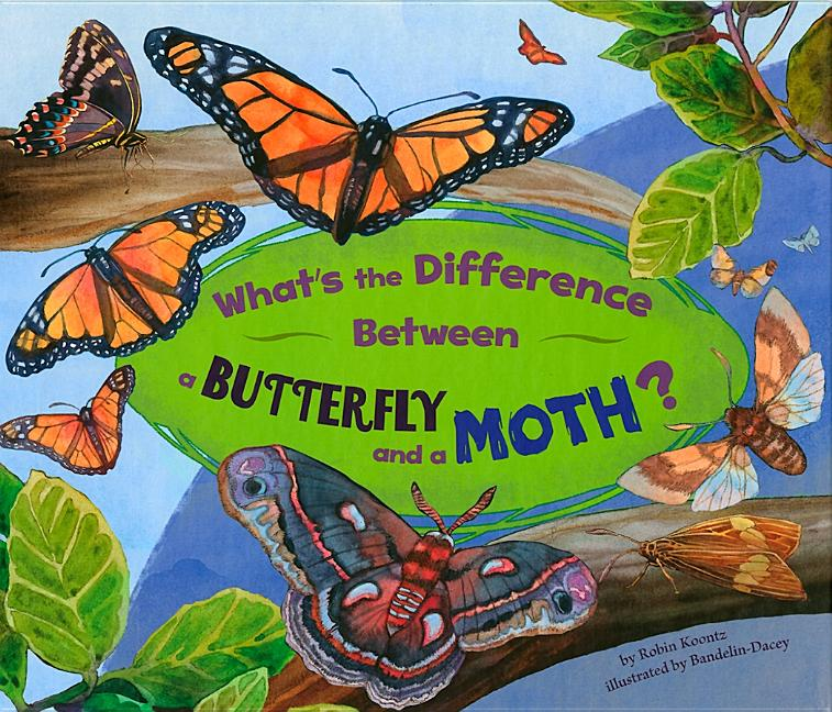 What's the Difference Between a Butterfly and a Moth?