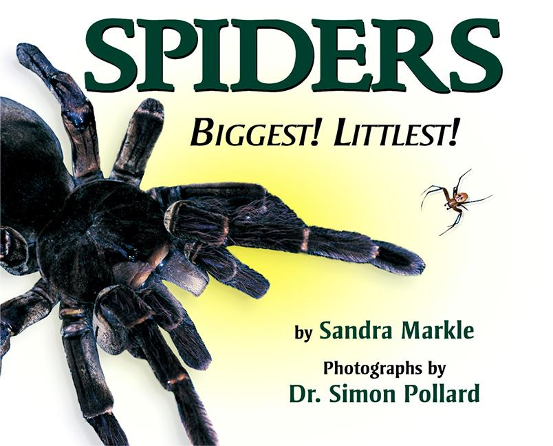 Spiders: Biggest! Littlest!