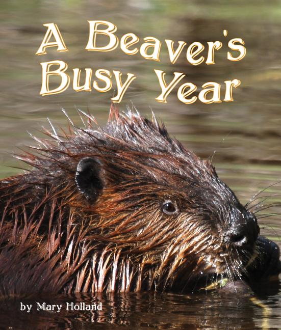 A Beaver's Busy Year