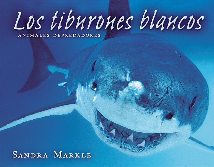 Great White Sharks / Los tiburones blancos