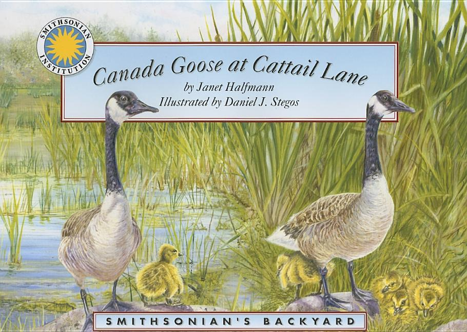 Canada Goose at Cattail Lane