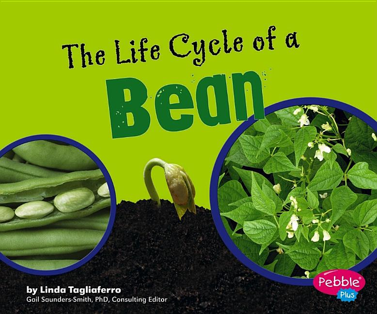 Life Cycle of a Bean, The