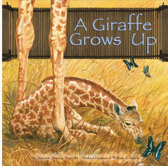 A Giraffe Grows Up