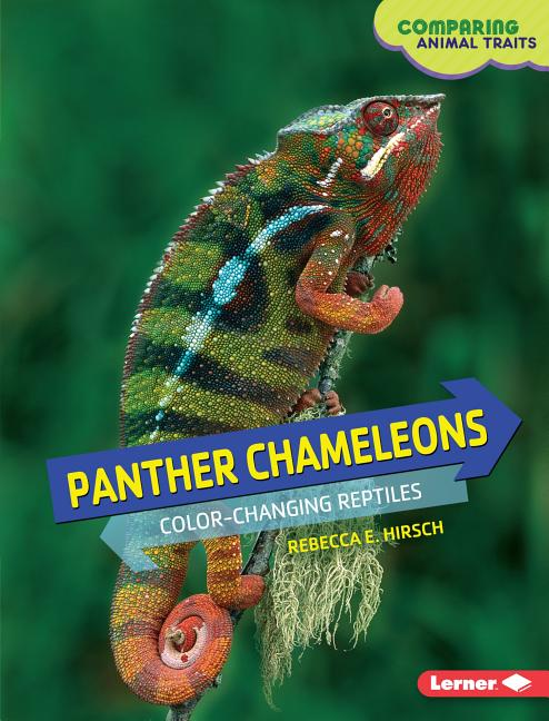 Panther Chameleons: Color-Changing Reptiles