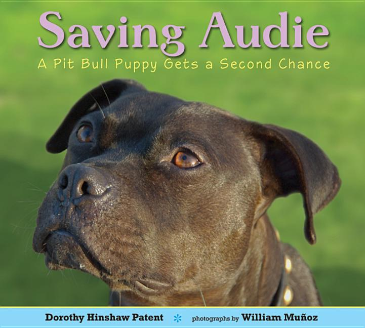 Saving Audie: A Pit Bull Puppy Gets a Second Chance