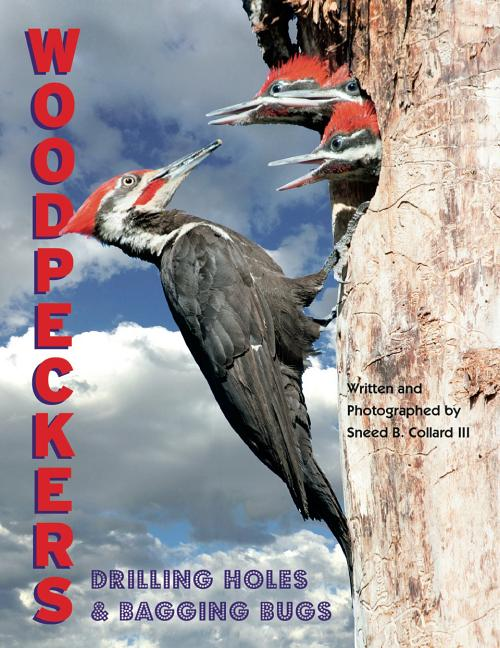 Woodpeckers: Drilling Holes and Bagging Bugs