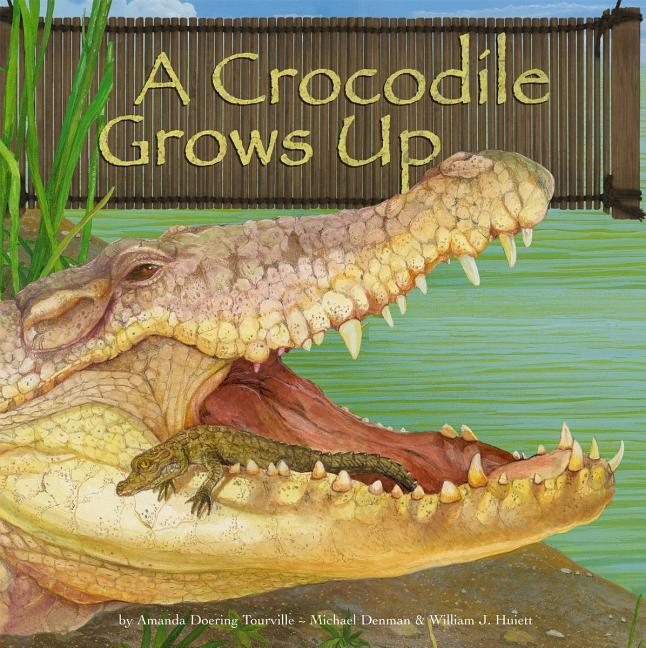 A Crocodile Grows Up