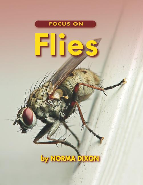 Focus on Flies