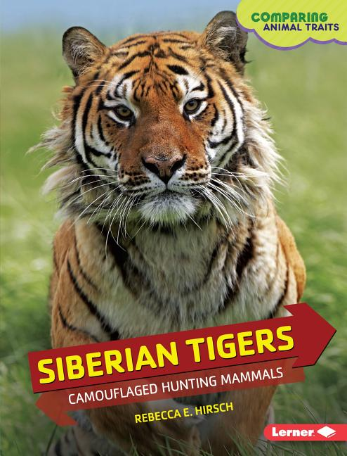 Siberian Tigers: Camouflaged Hunting Mammals