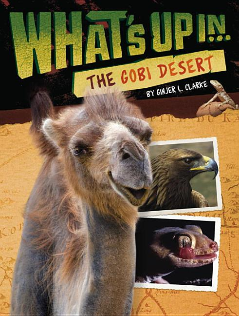 What's Up in the Gobi Desert