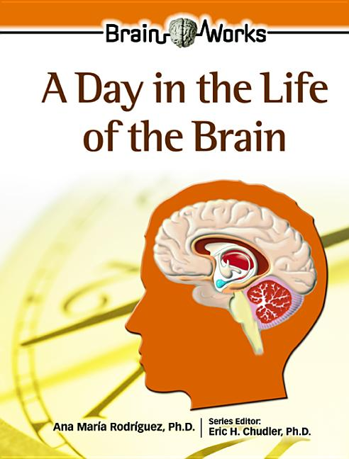 A Day in the Life of the Brain